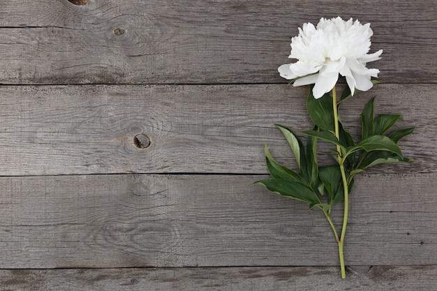 Fleur de pivoine en fleurs blanches sur le fond des vieilles planches avec texture