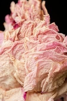 Fleur de pivoine rose séchée sur fond noir