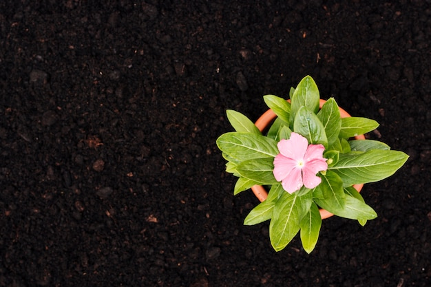 Fleur plate posée sur le sol