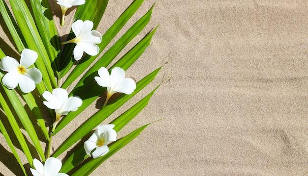 Fleur de plumeria sur des feuilles de palmiers tropicaux sur fond de sable. concept de fond d'été