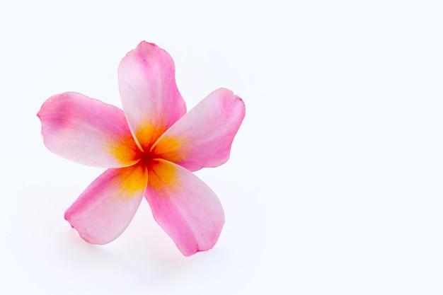 Fleur de plumeria sur fond blanc.