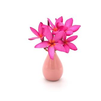 Fleur de plumeria rose dans un vase rose isolé