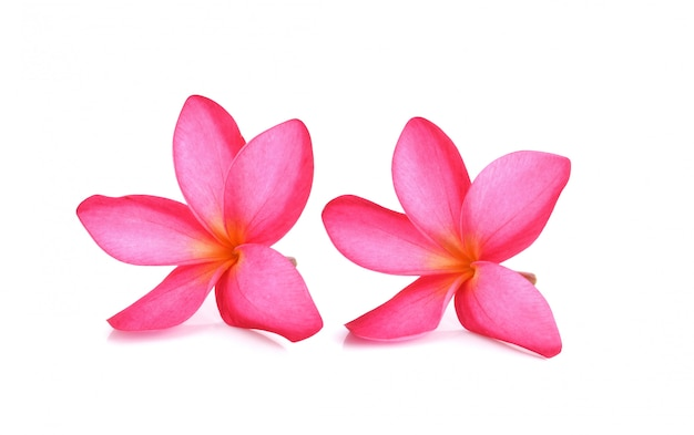 Fleur de plumeria rouge