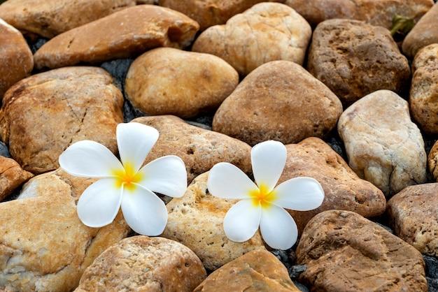 Fleur de plumeria