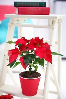 Fleur poinsettia et décorations sur échelle décorative