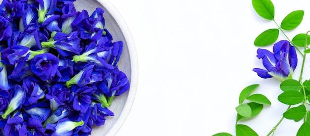 Fleur de pois papillon ou pois bleu avec des feuilles