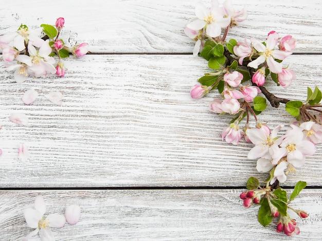 Fleur de pommier au printemps