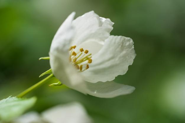 Une fleur de pommier s'épanouit par une chaude journée de printemps.