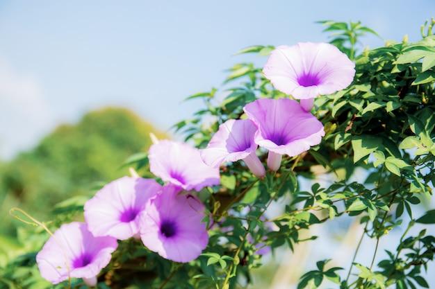 Fleur pourpre sur la clôture au ciel.