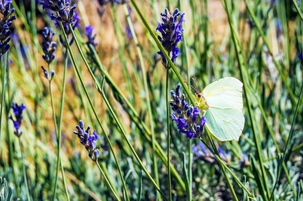 Fleur pourpre dans le domaine, flou d'arrière-plan de mise au point sélective