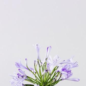 Fleur pourpre avec espace de copie