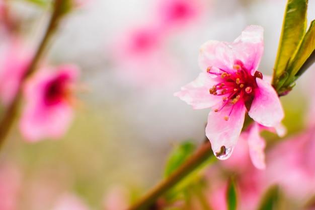 Fleur pourpre floraison bouchent