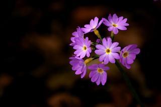Fleur pourpre, fond