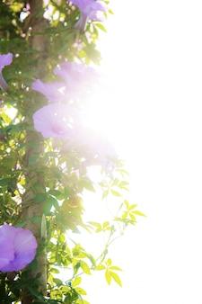 Fleur pourpre avec la lumière du soleil au ciel.
