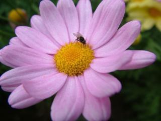 Fleur pourpre, mauve, fleurs