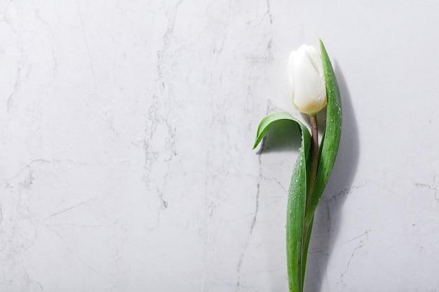 Fleur de printemps blanche unique sur un fond de marbre.