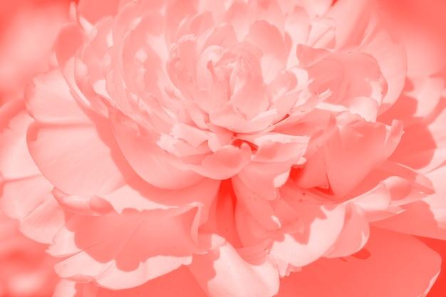 Fleur de printemps dans un corail à la mode tonique