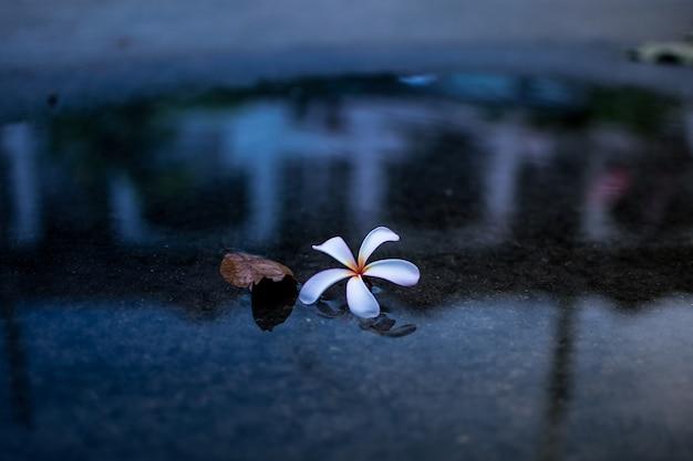 Fleur qui fleurit dans le champ qui fleurit dans le jardin
