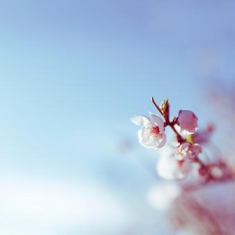 Fleur qui fleurit