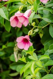 Fleur rose sur arbre
