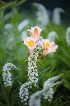 Fleur rose et blanche dans l'objectif tilt shift