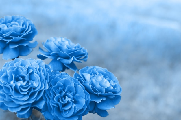 Fleur rose bleue classique sur fond de nature. couleur bleu classique