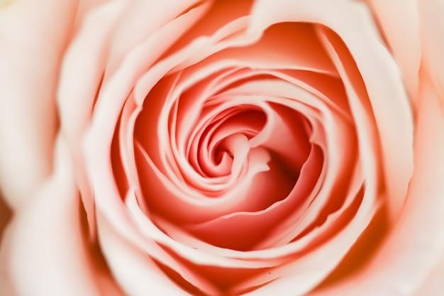 Fleur rose dans une beauté florale de jardin et fond botanique pour l'invitation de mariage et le concept de nature et d'environnement de carte de voeux