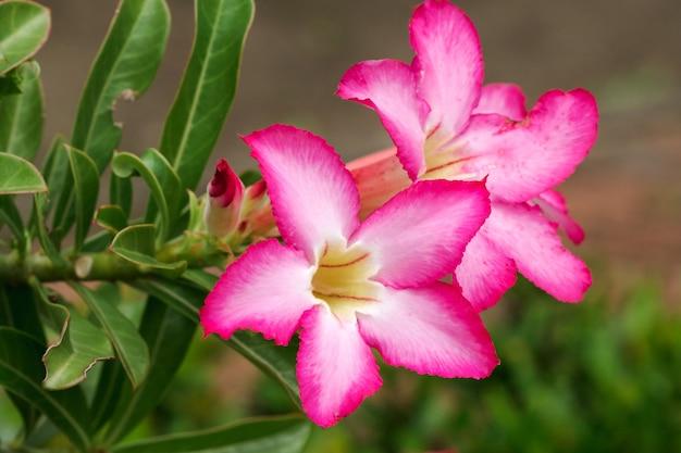 Fleur rose dans un jardin botanique