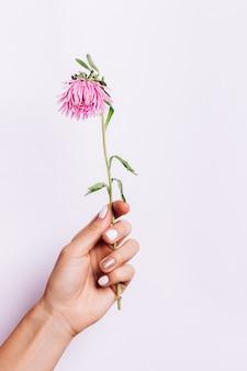 Fleur rose dans une main féminine avec une manucure sur un fond rose