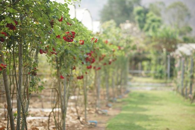 Fleur rose en fleurs dans le parc de jardin