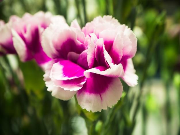 Fleur rose et flou fond de feuilles vertes