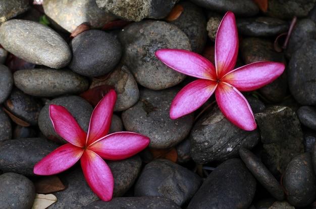 Fleur rose sur le fond de roche