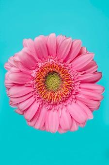 Fleur rose sur fond turquoise