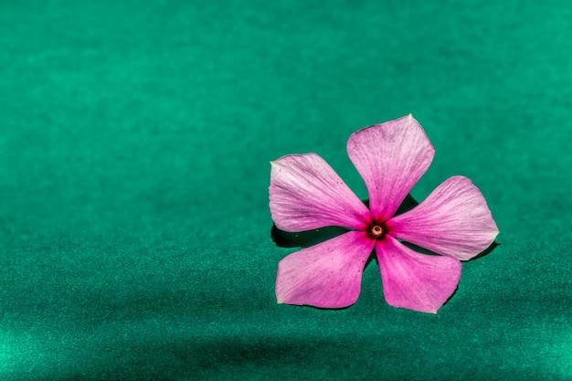Fleur rose sur fond vert