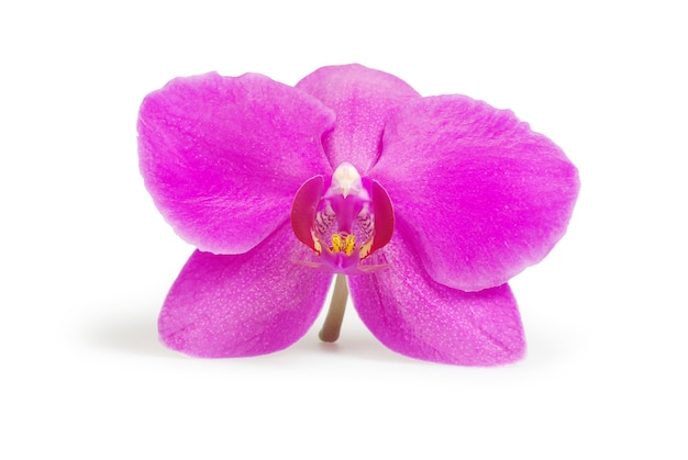Fleur rose d'orchidées isolé sur blanc