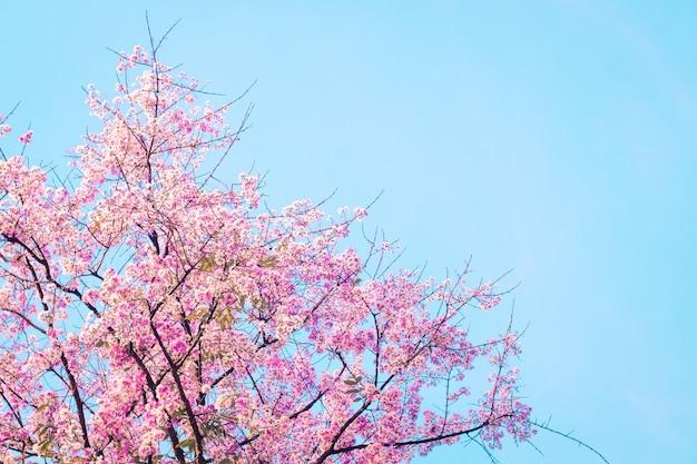 Fleur rose qui fleurit contre le ciel bleu