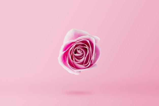 Fleur rose rose sur fond minimal style rose