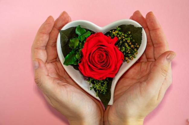 Fleur rose rouge dans un pot en forme de coeur sur fond rose, vue du dessus