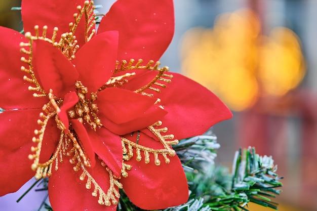 Fleur rouge de noël de lumières brûlantes floues