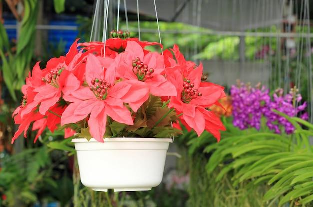 Fleur rouge en pot de fleurs, jardin