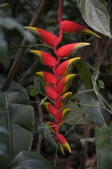 Fleur rouge tropicale exotique
