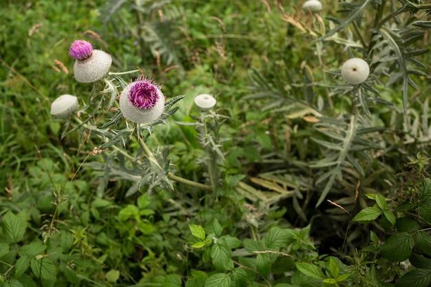 Fleur sauvage à angle élevé