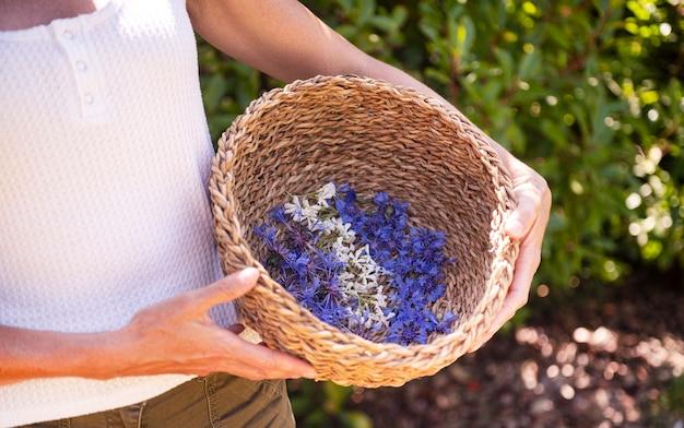 Fleur sauvage dans le panier pour la naturopathie et la botanique