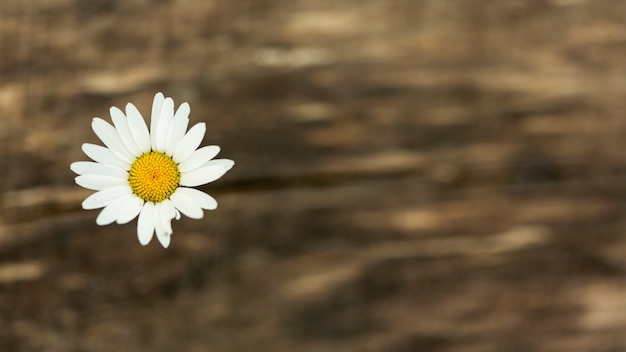 Fleur sauvage mignonne avec espace de copie