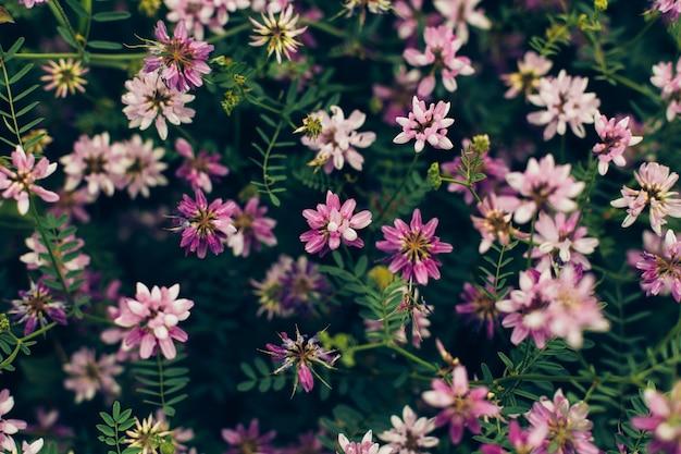 Fleur sauvage de printemps.