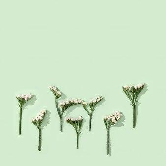 Fleur sèche naturelle feuilles de limonium et fleur blanche sur vert tendre