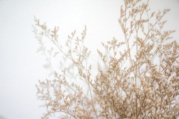 Fleur séchée dans une tonalité douce