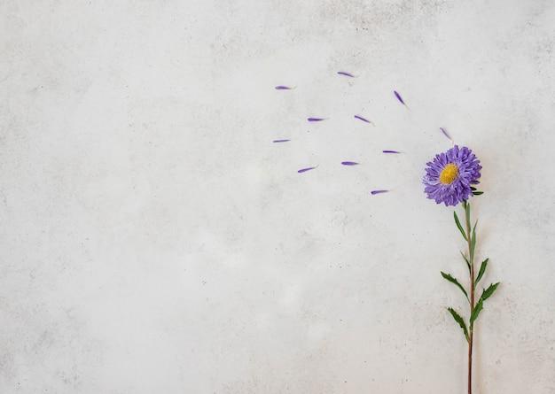 Fleur simple violette