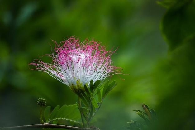 Fleur de soie perse