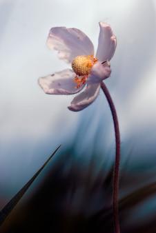Fleur solitaire dans le champ au coucher du soleil